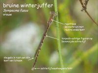206b-bruine-winterjuffer