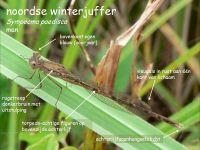 207a-noordse-winterjuffer