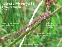 207b-noordse-winterjuffer