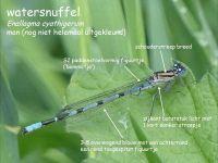 303b-watersnuffel