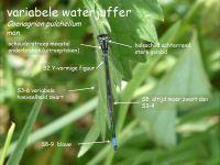 304a-variabele-waterjuffer