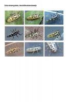 423-tienvleklieveheersbeestje-larve