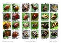 Zoekkaart-lieveheersbeestjes-a